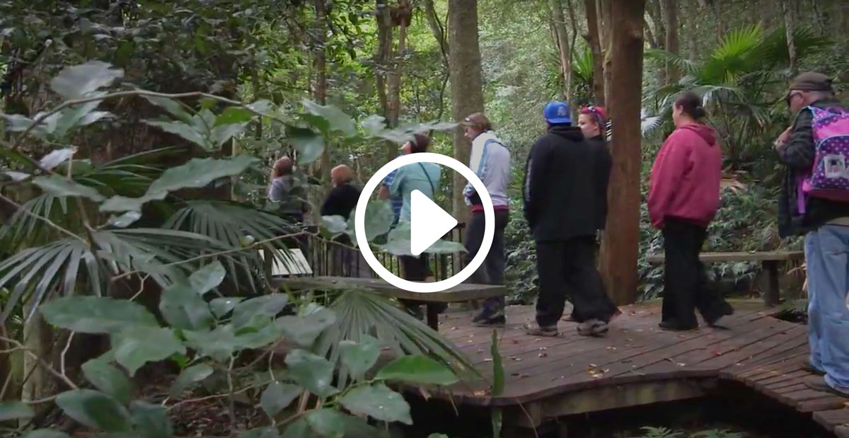 South Coast Tour - Minnamurra Rainforest